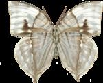 adelina_aliya_butterfly.png