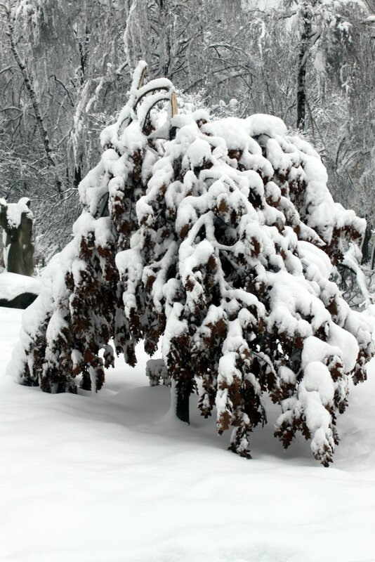 Снеголом в Киеве