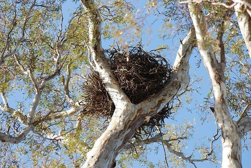 Гнездо.jpeg
