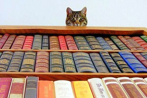 Кот в библиотеке