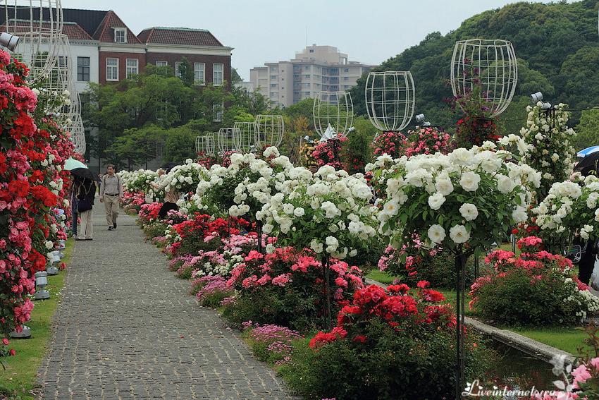 картинки в парке чаир распускаются розы дополнить тарелку