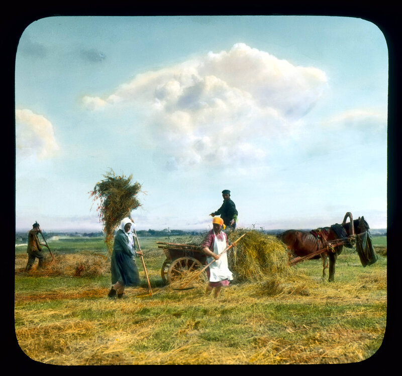 Санкт-Петербург. Крестьяне  собирают сено в деревне возле города