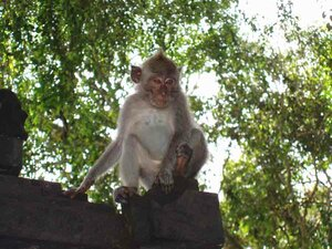 Анна Печенова - лес обезьян