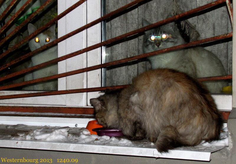 1240.09 Кошки
