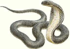 Каким будет новый 2013-й — год Чёрной Водяной змеи