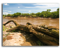 Кения. Масаи Мара. Mara River full of crocodiles.  Фото wrobel27 - Depositphotos