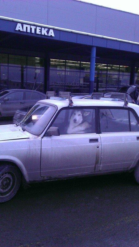 В связи со снегопадами начало работать новое такси.