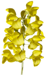 feli_gs_flowers2.png