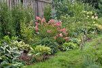 С какими цветами посадить гортензию