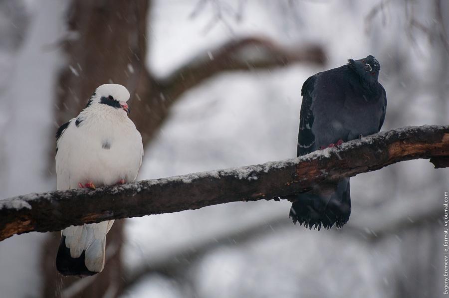 Москва, Битцевский парк, снег