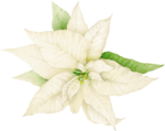 priss_oldtimeschristmas_poinsettia.png