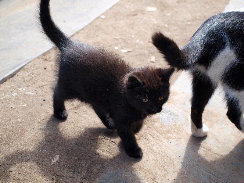 Кошки и котята спасателей P4281390.jpg