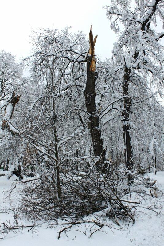 Сломанное дерево в Мариинском парке