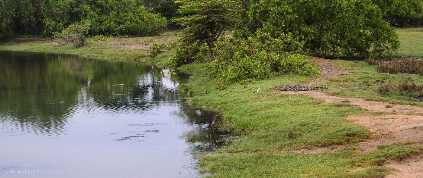 5. Шри-Ланка. Фото. В заповеднике Яла (Yala National Park) на каждом шагу можно встретить крокодила (320, 50, 7.1, 1/30)