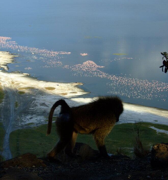 Национальный парк Озеро Накуру. Кения