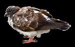 LottaDesigns_OldWorld_bird_1.png
