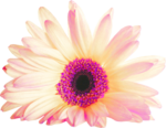 pink flower3-(Magical).png