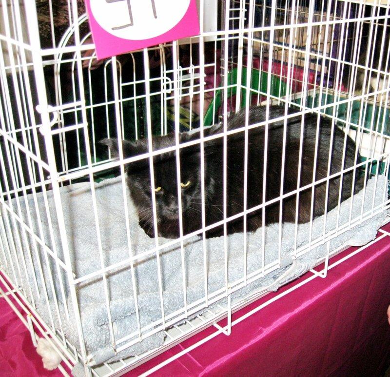Выставка кошек в Армавире 24 февраля 2013 года.
