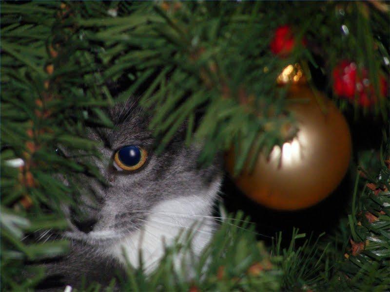 Коты на ёлке - фото 20