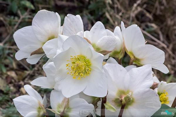 Я люблю все цветы, часть 32