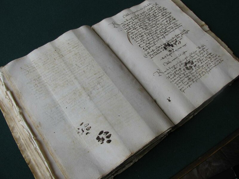 Кошачий след в истории