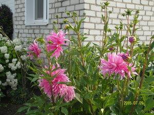 Цветы у дома