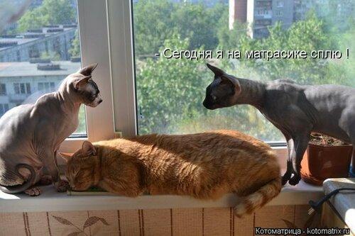 http://img-fotki.yandex.ru/get/4130/194408087.1/0_8e418_d277981a_L.jpg