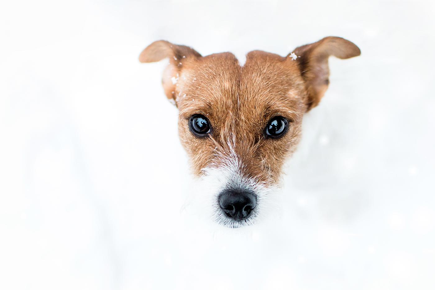 Портреты животных / фотограф Milla Rice