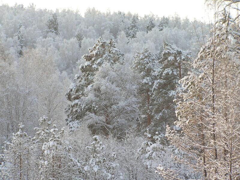 Смешанный лес на склоне горы (02.04.2013)