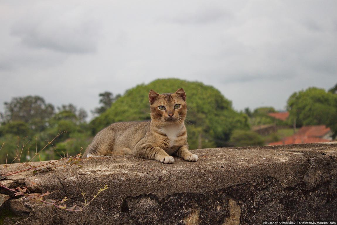 Шри-Ланка_Галле_29
