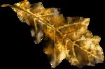 feli_l_leaf.png