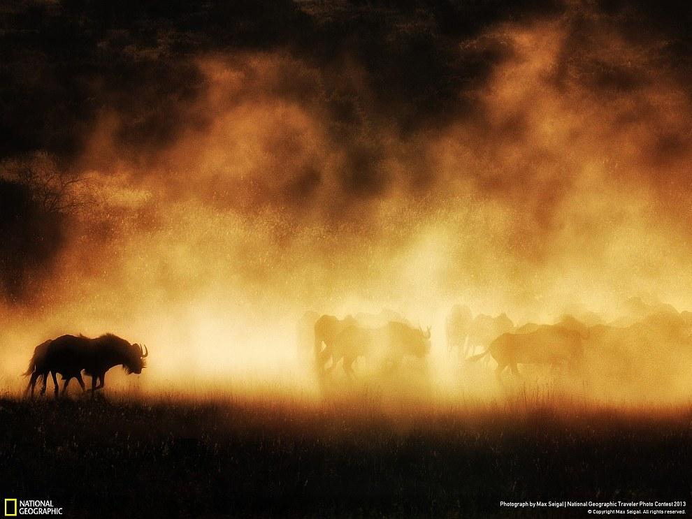 Слоны из заповедника в южной Африке. (Фото Doug Croft):