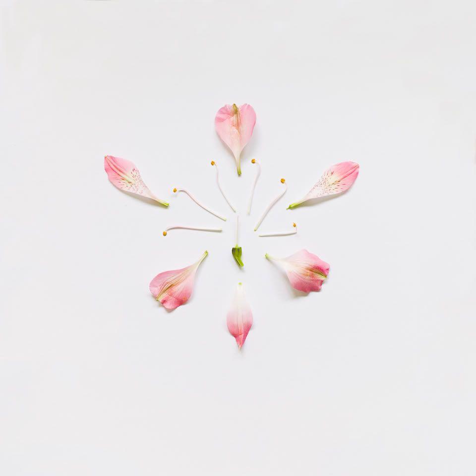 Взрыв цветов Qi Wei