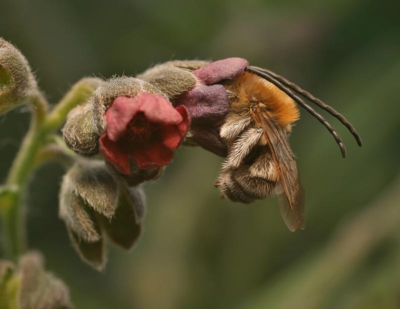 фото уставшей пчелки для