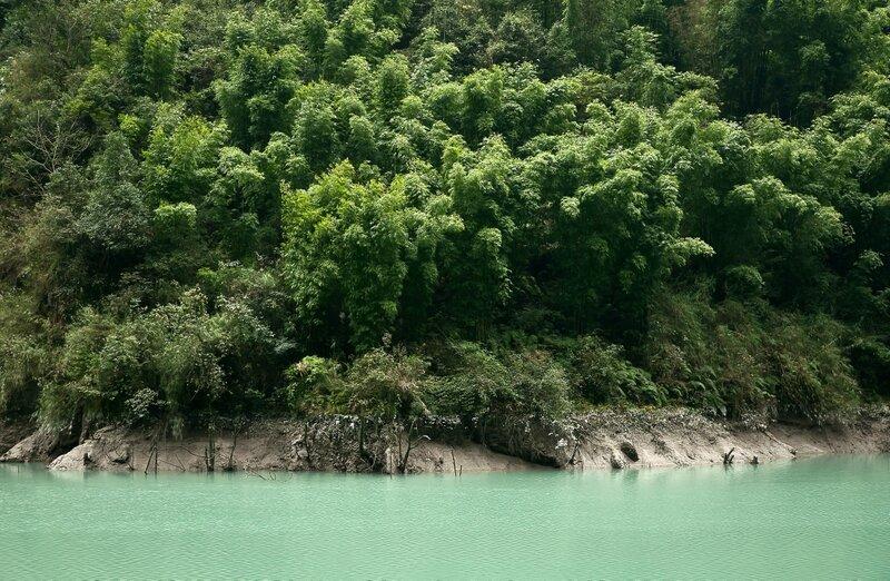 Бамбуковый лес.