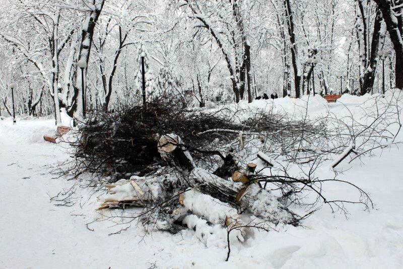 Последствия снеголома в Мариинском парке