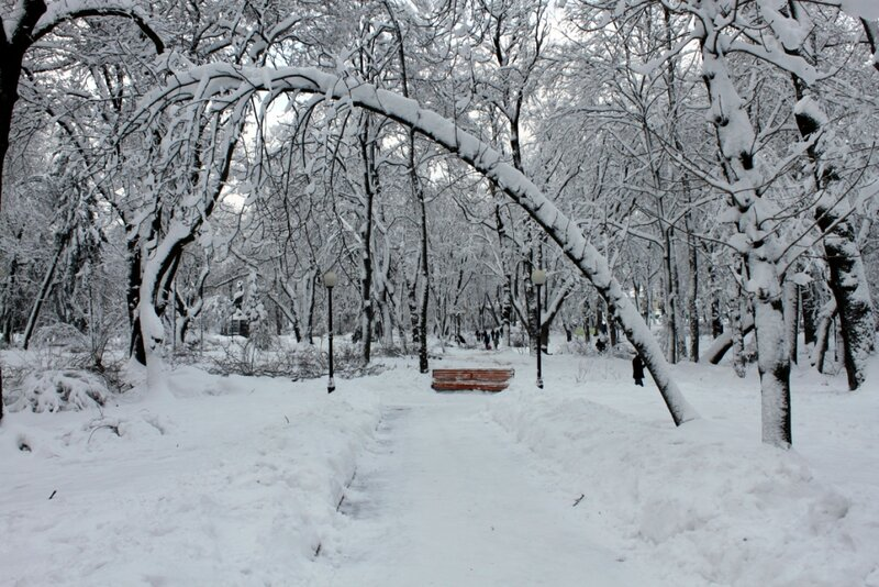 Дерево согнулось под массой снега