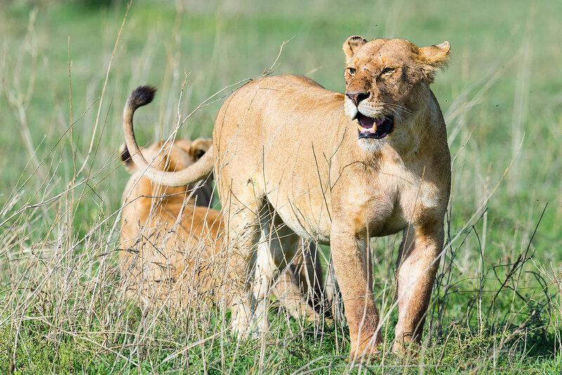 Танзания. Животный мир