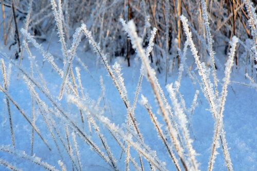зимняя прогулка трава