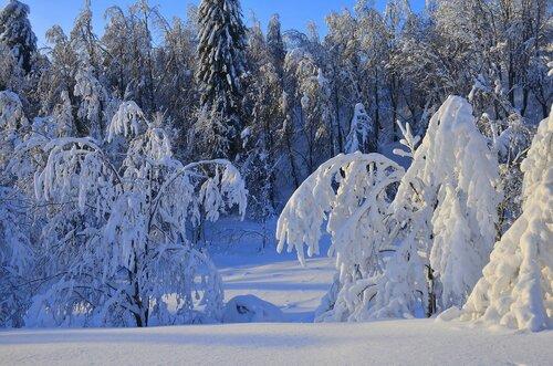 Зимние кружева.