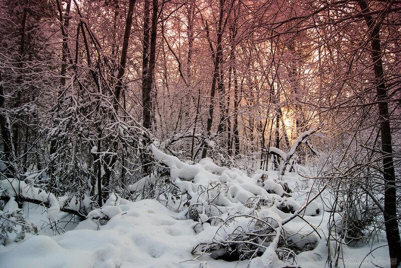 В белом безмолвии, сказочен лес, Первый снежок опустился с небес