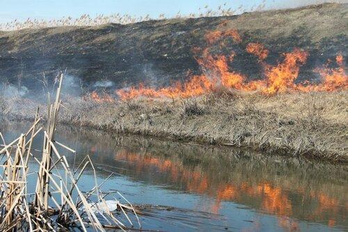 Снова пожар в пойме реки Реут в Бельцах