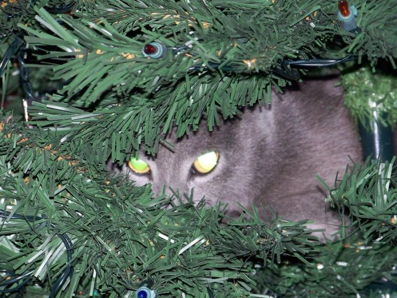 Коты на ёлке - фото 26