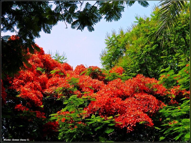 Редкие и красивоцветущие растения  140