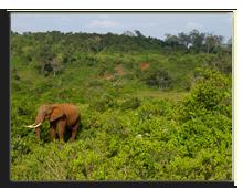 Кения. Национальный парк Абердар. Лодж The Ark. Фото erichui - Depositphotos