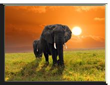 Кения. Национальный парк Абердар. Лодж The Ark. Фото znm666 - Depositphotos