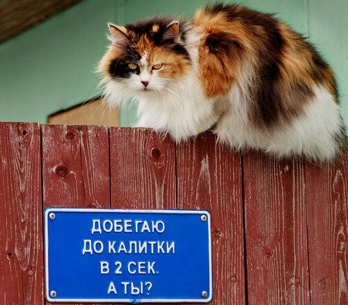 http://img-fotki.yandex.ru/get/4131/162013397.7/0_109545_51c6665d_L.jpg.jpg