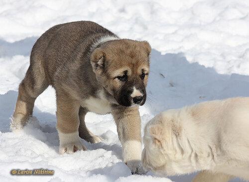 http://img-fotki.yandex.ru/get/4131/1773011.12/0_8b069_dfd0bf2b_L.jpeg