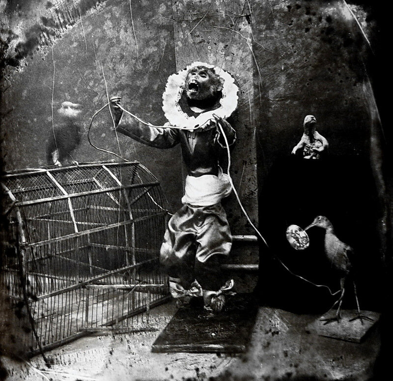 joel peter witkin the photographer essay Decadence in the photography of joel-peter witkin / melissa dubose --the mechanisms of the false in witkin's photography / regina marler --three perspectives on the work of joel-peter witkin / tanya tewell.