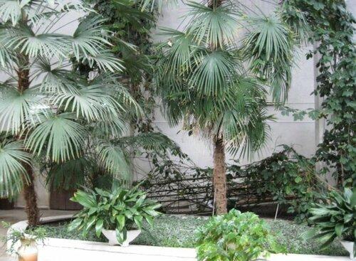 Более 150 видом растений (02.04.2013)